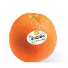 Sinaasappel met full colour sticker