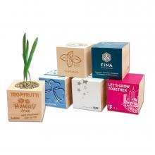 Ecocube   Plantje in houten kubus